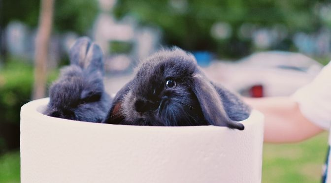 two rabbits in a planter