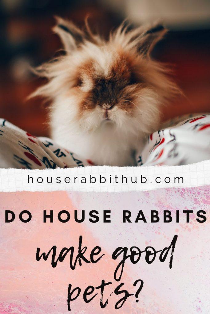 Do House Rabbits Make Good Pets House Rabbit Hub