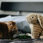 rabbit and stuffed rabbit toy