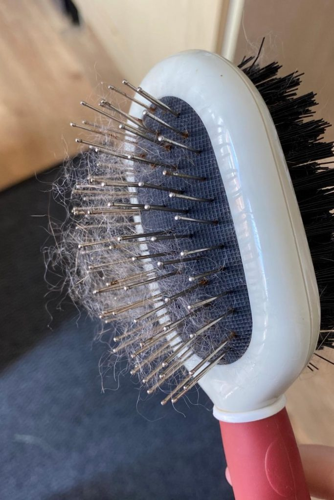 best cheap brush for grooming rabbits